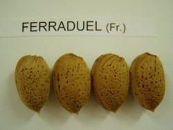 FERRADUEL BADEM FİDANI - Thumbnail